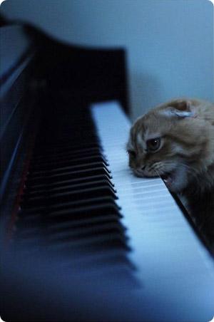 ピアノをかじる猫